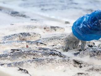 Frozen Fish Market Looks Upbeat