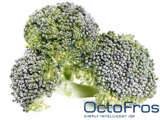 IQF Broccoli-One of the Most Popular Products