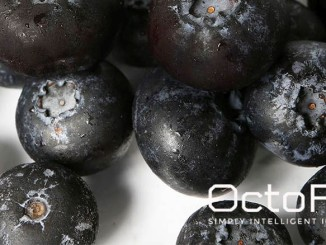 IQF Bilberries – the New Superfood