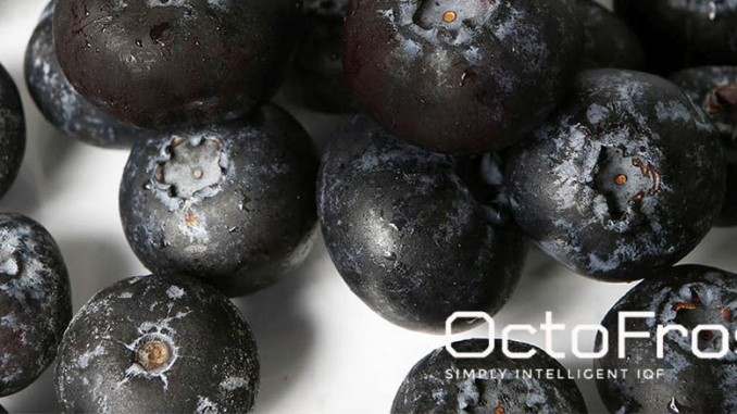Superfood IQF Bilberries Octofrost