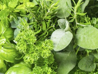 IQF Herbs – A Growing Trend