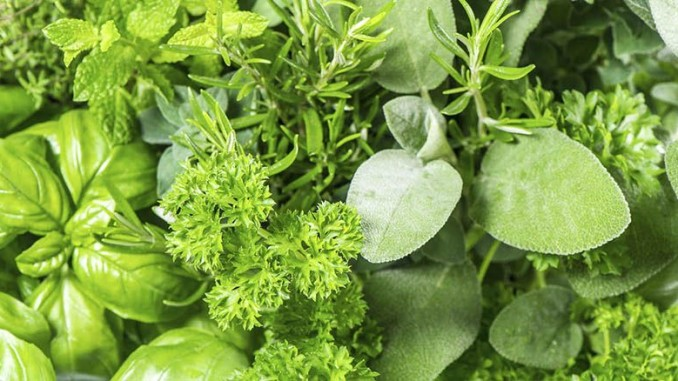 IQF Herbs A Growing Trend