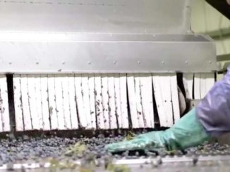 "AFFI Unveils ""Meet Your Frozen Food Maker"" Video Series"